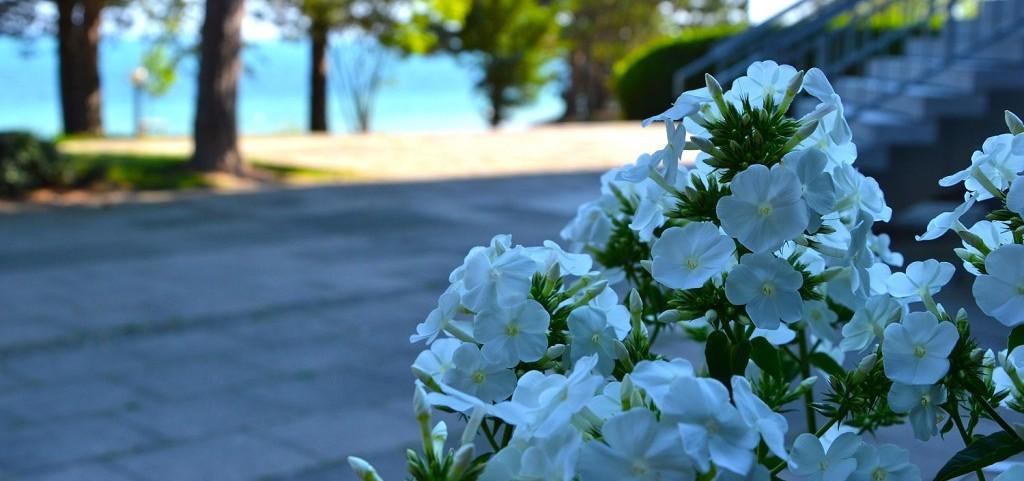 Buero_Eingang_Blumen