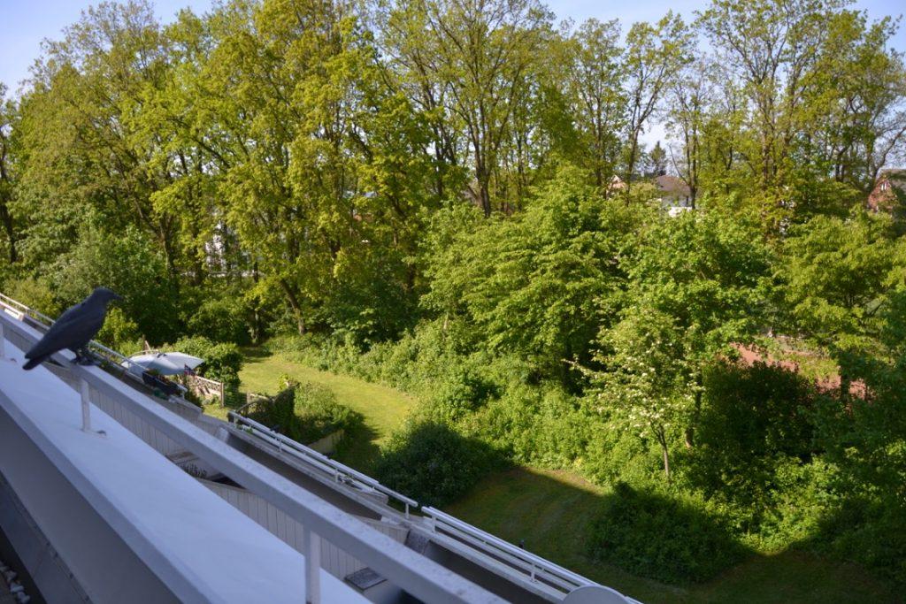 Ruhige_Lage_A-26_Balkon_Ausblick
