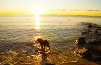 Hundestrand & Steilküste