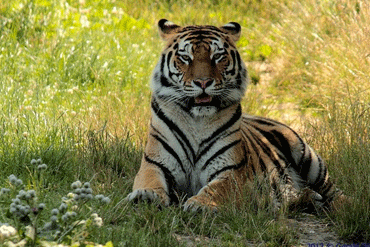 Tigerpark_Dassow